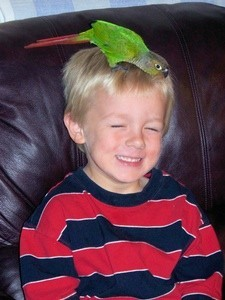 Steven and Connor (Conure Parrot)