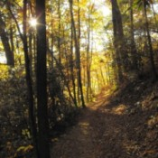 Light through the trees.