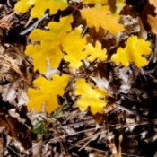 Needles and Leaves