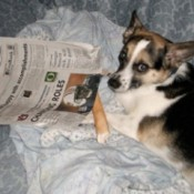 A dog with a newspaper.