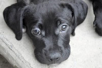 Black puppy.