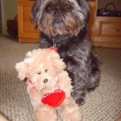 cute dog with stuffed dog