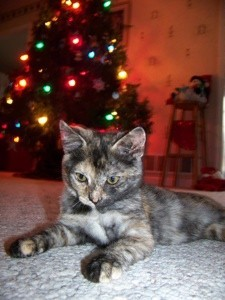 Kitten and Christmas tree.