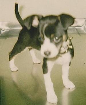 Poppy as a puppy.
