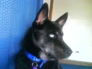 Black dog.