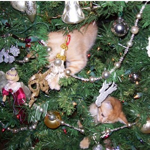 cats in Christmas tree