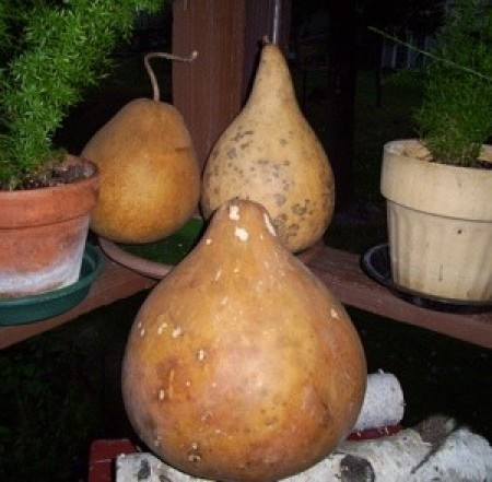 several gourds