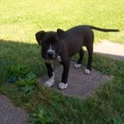 Black dog with white feet.