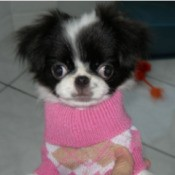 small dog in pink sweater