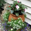 Garden flowers planted in a strawberry pot.