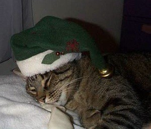 Cat with green Santa hat.
