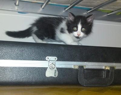 Fuzzy black and white kitten.