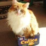 Dandy in a Cuties tangerine box.