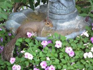 """Backyard """"Drinking"""" Fountain"""