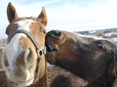 Scenery: Horses