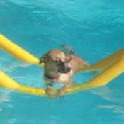 Jaxs in pool.