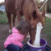 Si (Arabian/Quarter Horse)