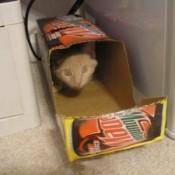 Homemade Cat Carrier