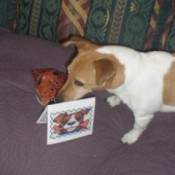 A dog with a card and present.