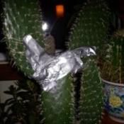 Saving My Broken Cactus