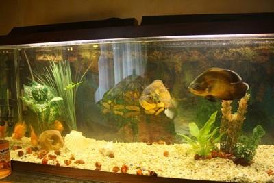 Saving money on aquarium supplies thriftyfun for Fish store lincoln ne