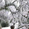 ice coated branches