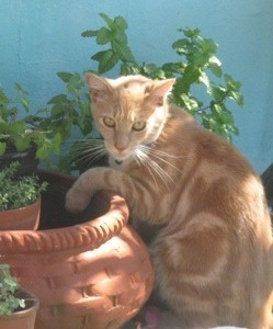 Cat and flower pot.
