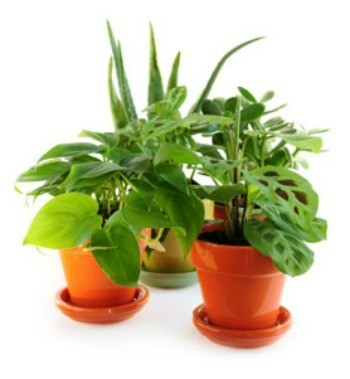 Bringing Plants Indoors for the Winter | ThriftyFun
