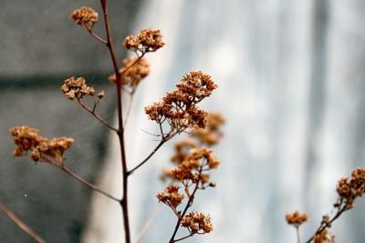 Spider on brown flower