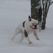 Gabe running in snow.