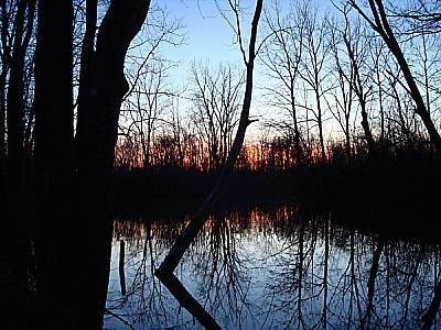 Reflections of trees on lake.