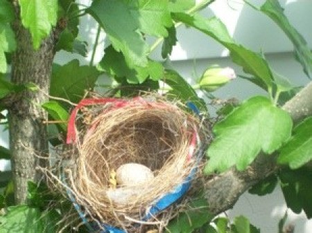 A robin's nest with red and blue ribbon.