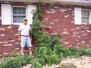 Man Standing Next to Gigantic Tomato Plant