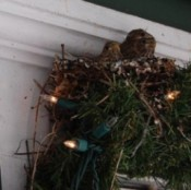 Nest with Christmas lights.