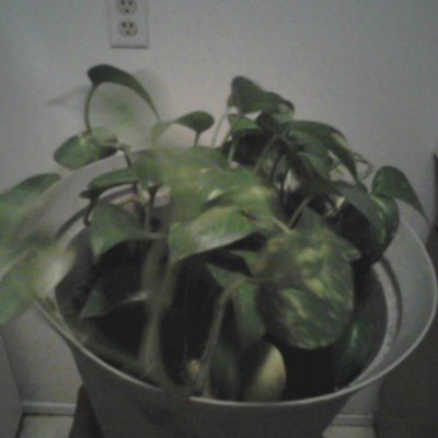 green leaved plant
