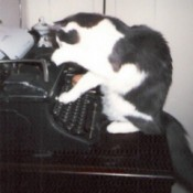 Cat on typewriter