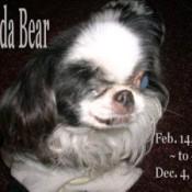 Photo in memory of Panda Bear.