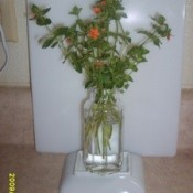 Cut stems in vase, with orange flowers.