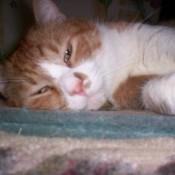 Closeup of cat's face.