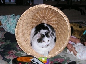 Black and white cat in basket.