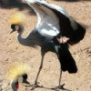 Crane at Cheyenne Zoo