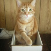 Fry in a box.
