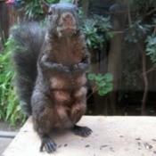 Hungry Mama Squirrel