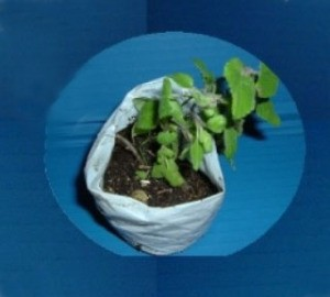 Shopping Bag Into Planting Bags - seedling in plastic bag pot