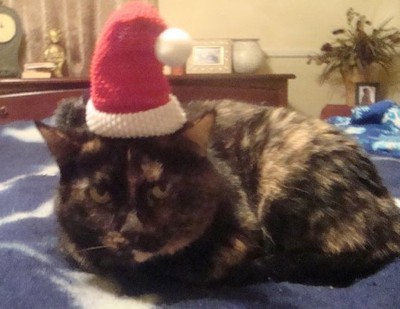 Tortie in Santa hat.