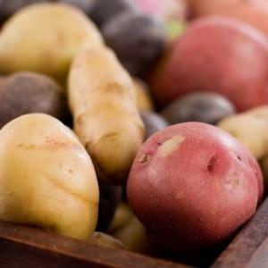 various kinds of potatoes