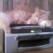 Cat lying on printer.