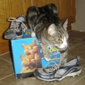 Uses for Kitty Litter