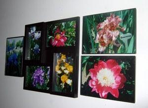 Flower photos.