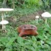 Frog in garden.